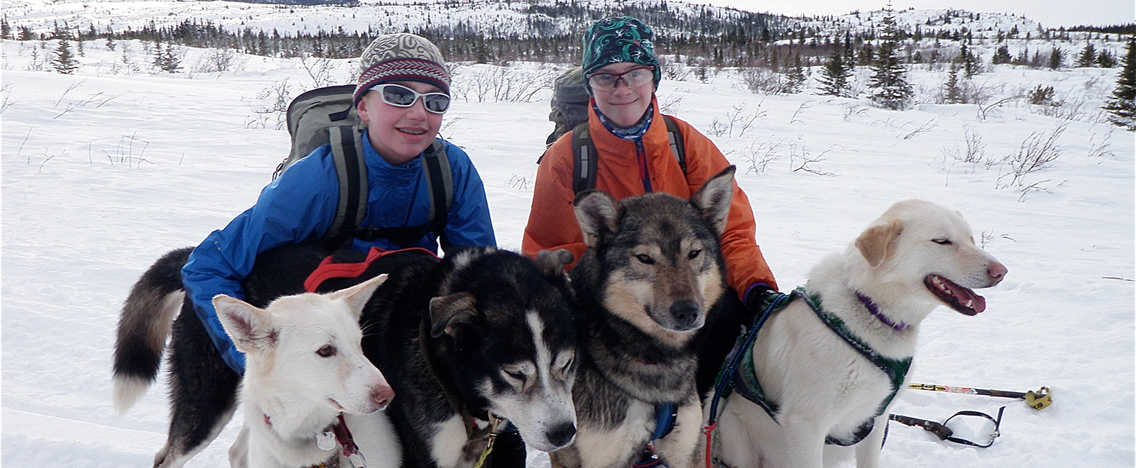 huskies dogs   ski joring