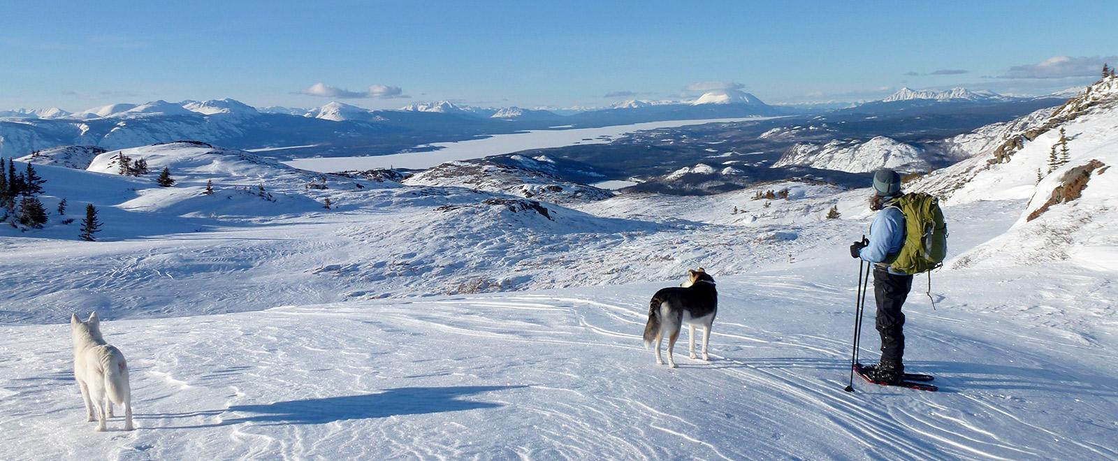 winter yukon landscape