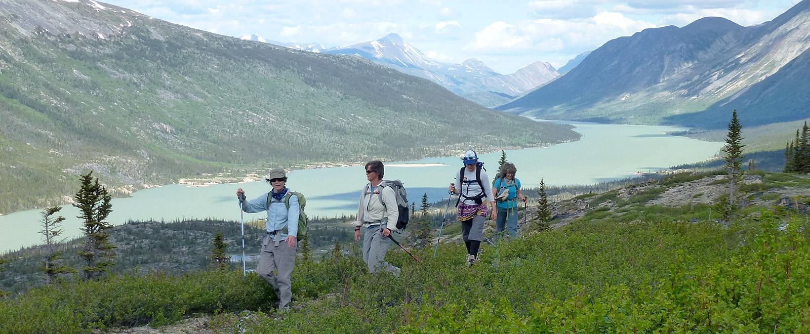 hiking primrose