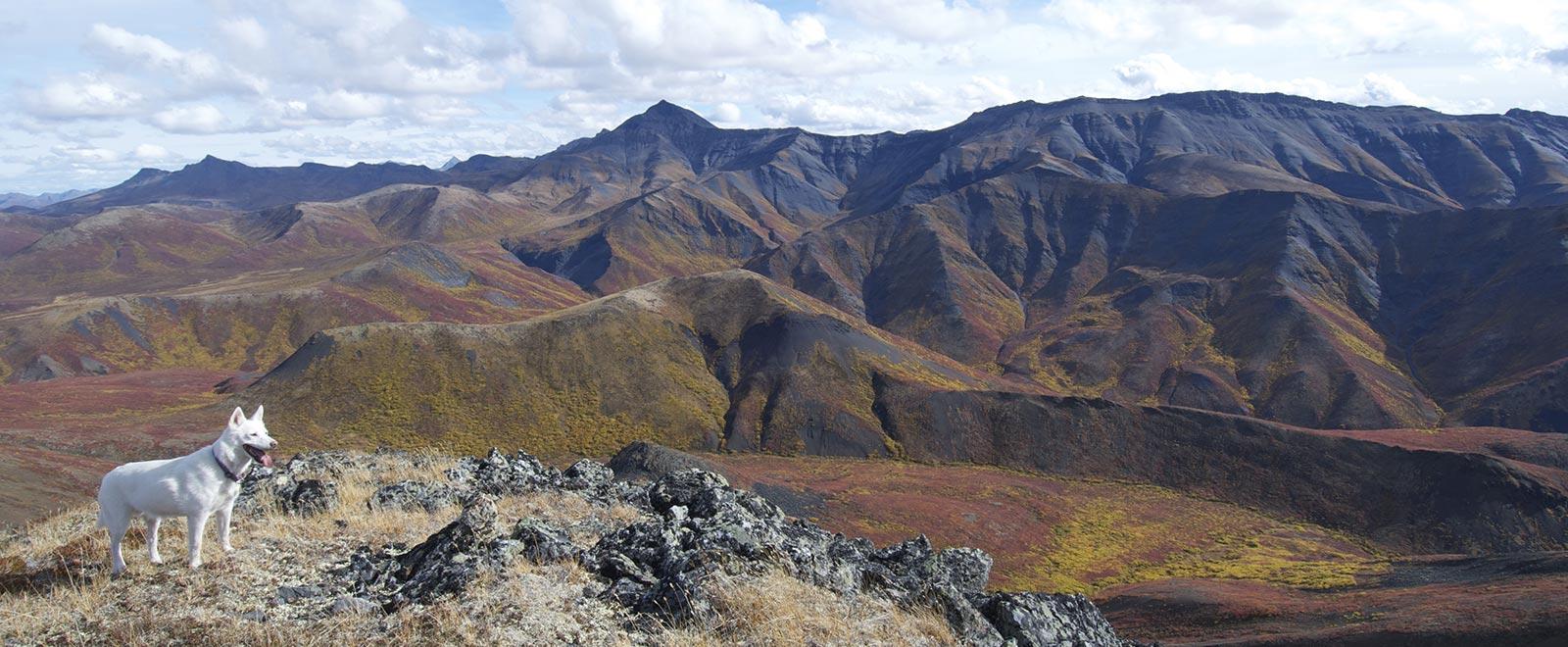 Ogilvie Mountains vista, Tombstone Territorial Park